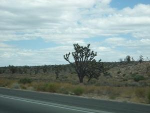 120 USA Mohave Desert