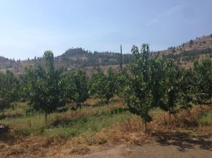 Frutteti a sud di Kelowna