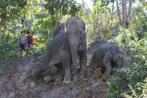 Elefanti!
